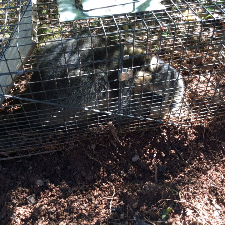 Wildlife Removal in The Woodlands TX