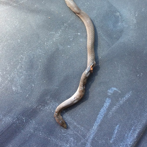 Snake Control and Removal