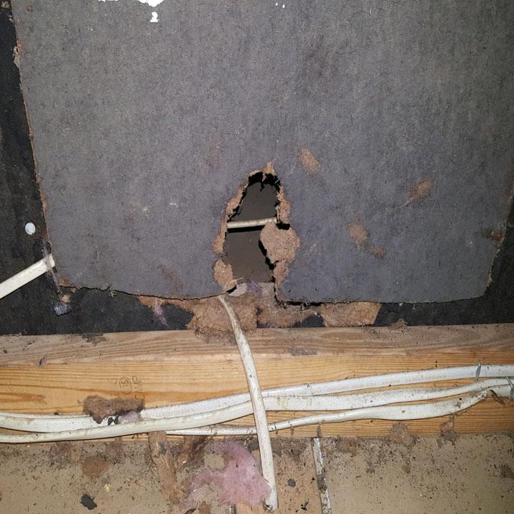 Remove Rats from Attic Walls